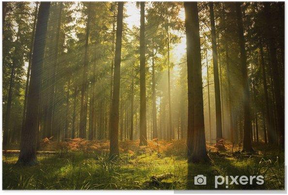 Poster Prachtig boslandschap - Stijlen