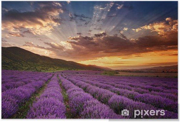 Poster Prachtige landschap met lavendel veld bij zonsopgang - Thema's