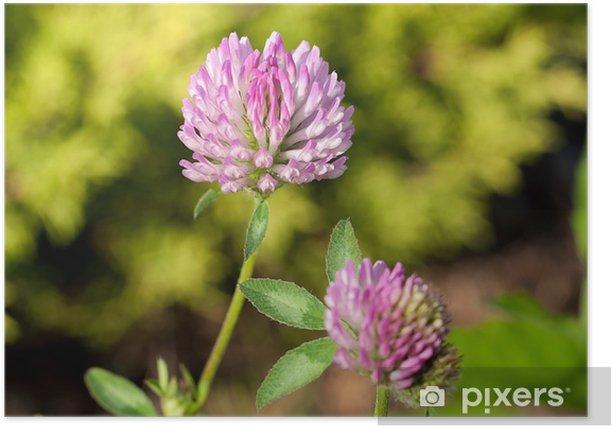 Poster Prairie close-up - Fleurs