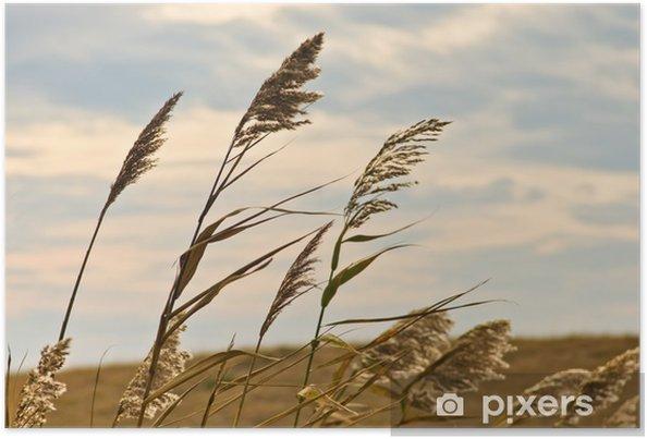 Poster Prairie sur un terrain sec contre le ciel sombre et les nuages de pluie - Saisons