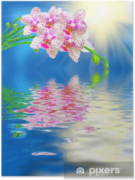 Poster Près de la fleur d'orchidée - Fleurs