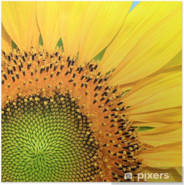 Póster Primer plano de girasol hermoso - Temas