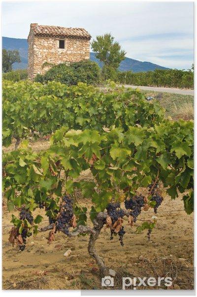 Champ De Vigne provence : cabanon dans un champ de vigne poster • pixers® • we live