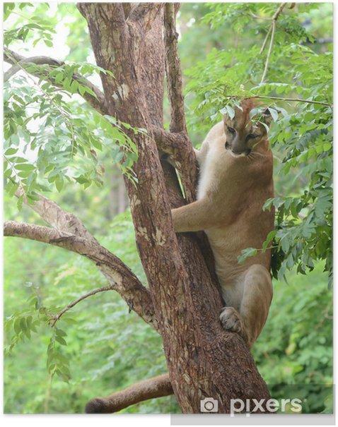 puma climbing on tree Poster - Mammals