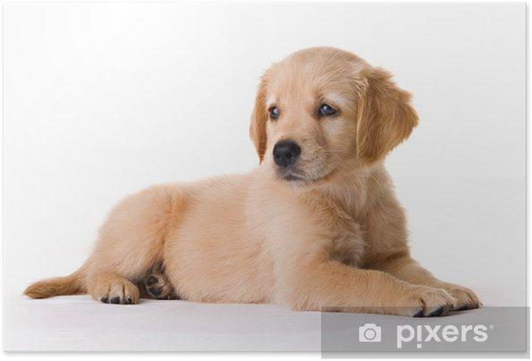 Poster Pup - Zoogdieren