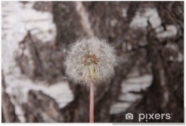 Poster Pusteblume - Fleurs