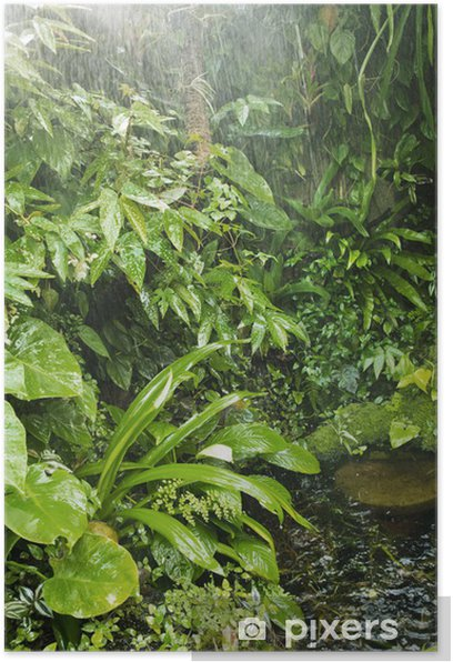 rainforest background poster pixers we live to change