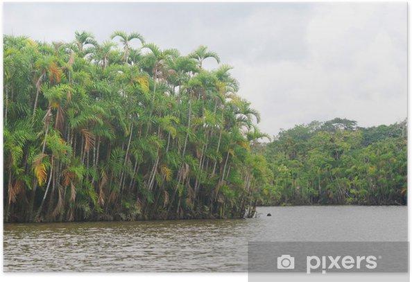 Poster Rainforest de la rivière, l'Amazonie, l'Equateur - Amérique