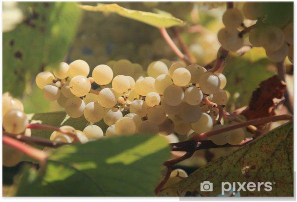 Poster Raisins secs - Plantes