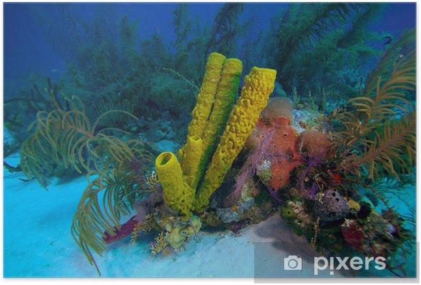 Poster Récif de corail près de Cayo Largo, Cuba - Fleurs