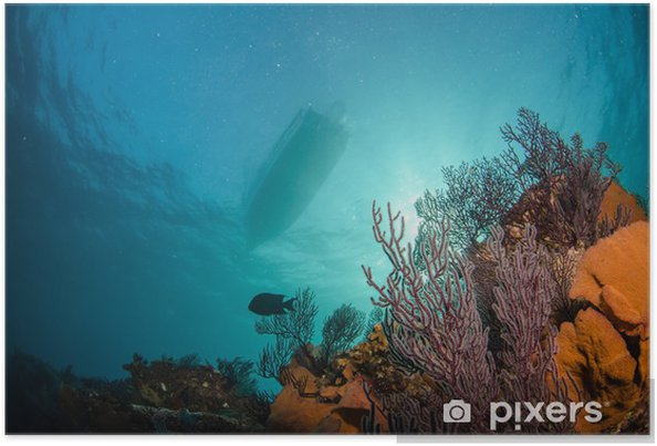 Poster Récifs du Pacifique - Animaux marins