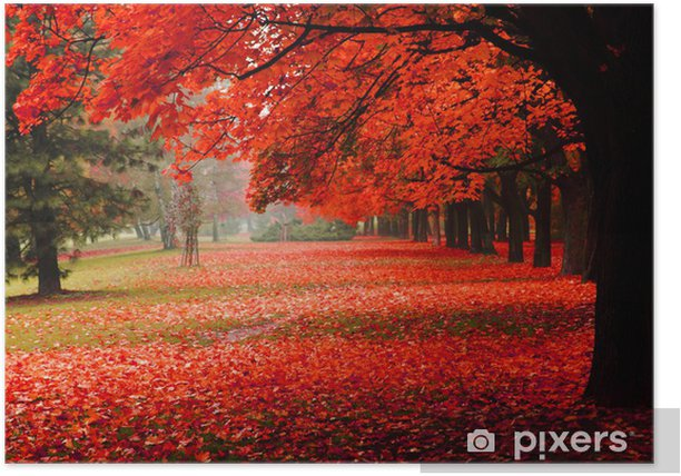 red autumn in the park Poster - Destinations