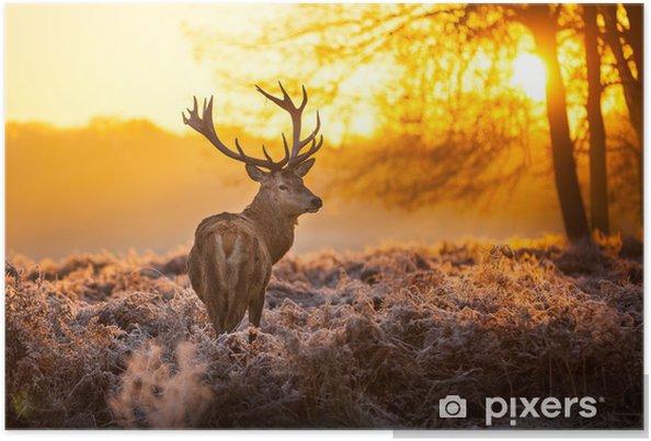 Póster Red Deer en domingo por la mañana. - Estilos