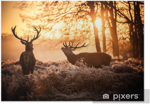 Red Deer in Morning Sun. Poster - Styles