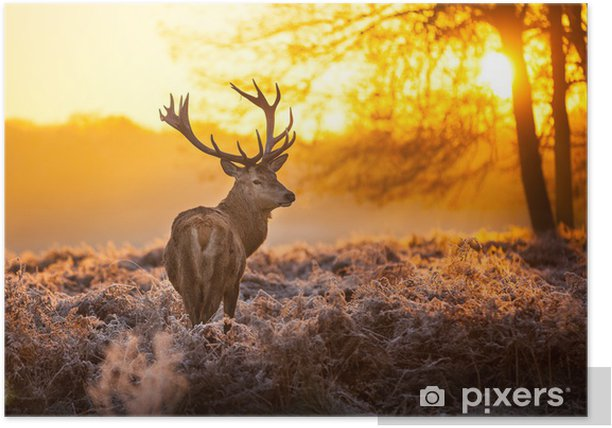Red Deer in the morning sun Poster - Styles