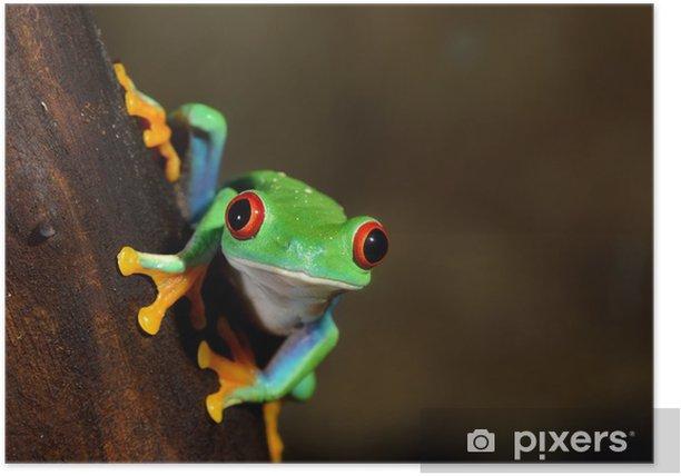 red-eye frog Agalychnis callidryas in terrarium Poster - Other Other