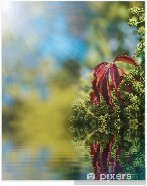 Poster Reflétant dans l'eau 2 - Plantes