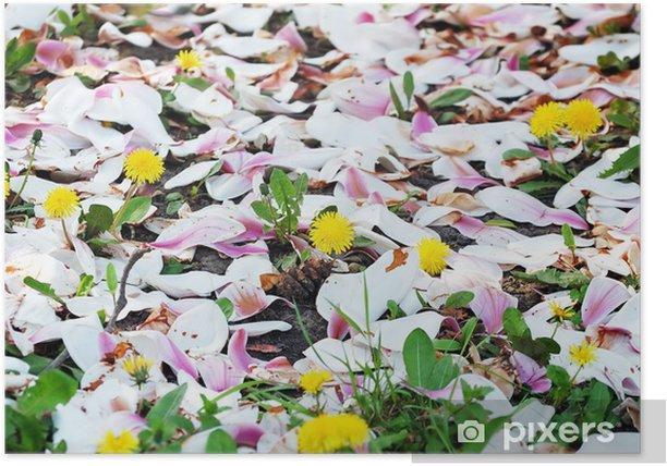 Poster Rez de pissenlits en fleurs couvertes de pétales de magnolia - Saisons