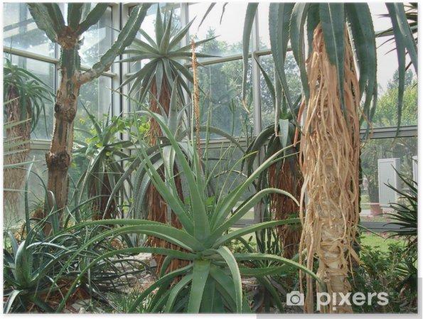 Poster Riesenkakteen im Palmengarten Francfort - Plantes