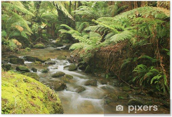 Poster Rivière Rainforest - Thèmes