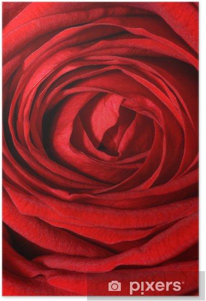 Poster Rosa rossa - Fleurs