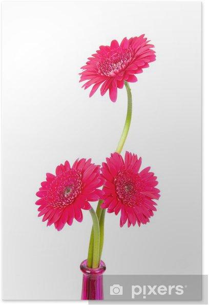 Poster Rose Gerber fleurs sur fond blanc - Fleurs