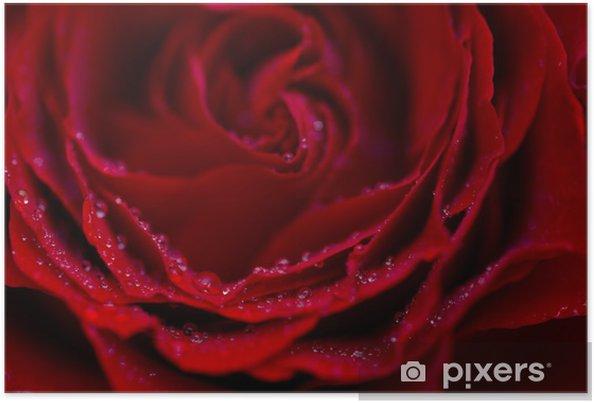 Poster Rose pédale macro avec des gouttes de rosée et bokeh flou - Fleurs