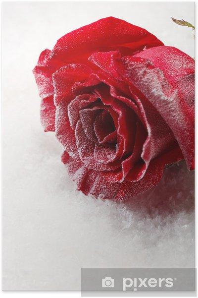 Poster Rose rouge dans la glace sur fond de neige - Fleurs