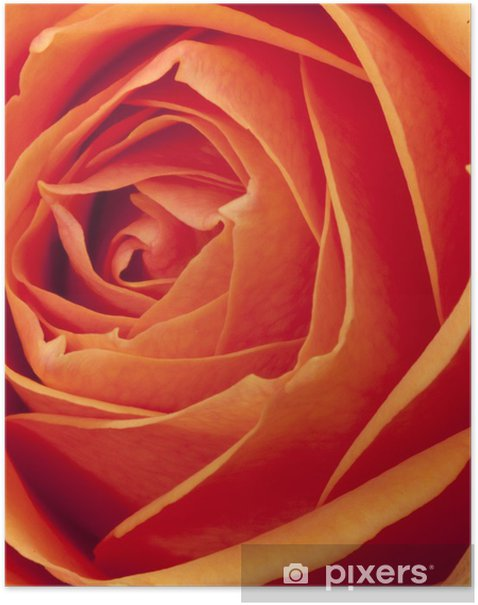Poster Rose thé - Célébrations