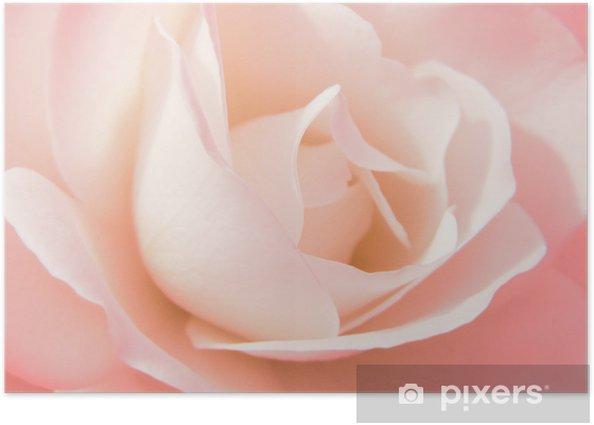 Poster Rosenblute - Fleurs