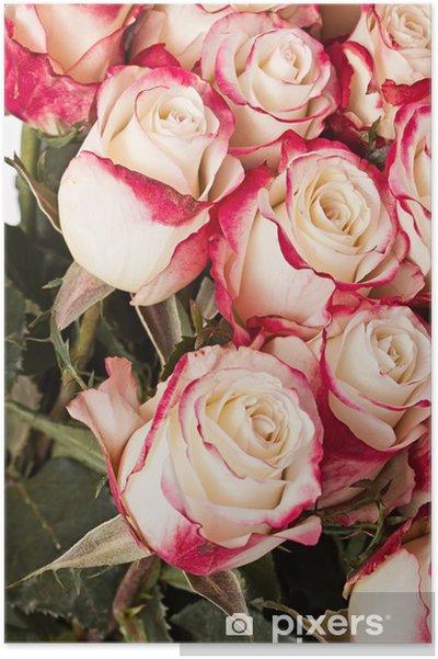 Poster Roses roses - Célébrations