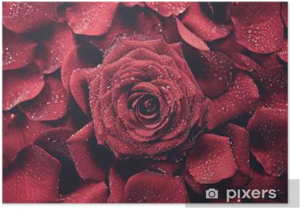 Poster Roses rouges fond - Plantes et fleurs