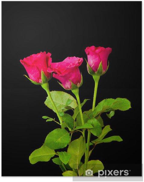 Poster Roses rouges - Fleurs