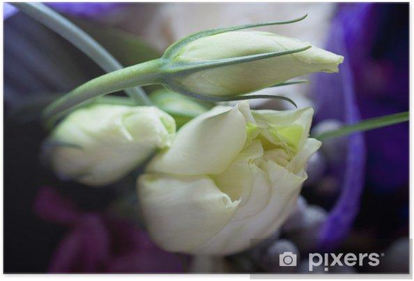 Poster Roses tendres - Fleurs