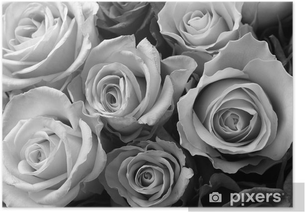 Roses Poster - Themes