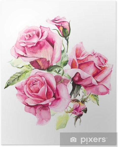 Poster rosier motif de rose rose dessins de mariage peinture l 39 aquarelle cartes de voeux - Dessin de rosier ...