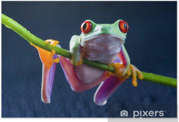 Poster Rouge grenouille aux yeux sur le bambou - Grenouilles
