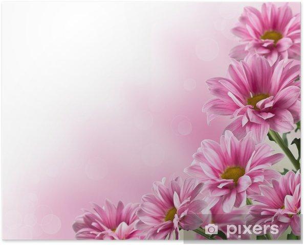 Poster Roze bloeiende chrysant bloemen - Stijlen