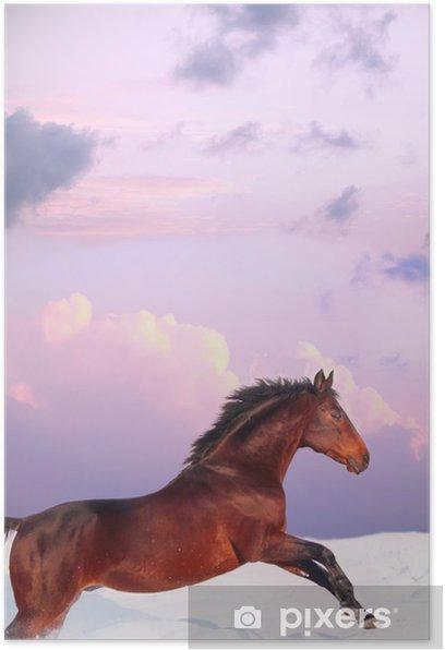 Poster Running bay cheval dans le coucher du soleil à l'hiver - Mammifères