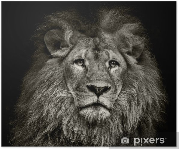Poster Sad leeuw - Thema's