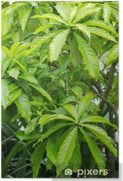 Poster Sagaribana - Plantes