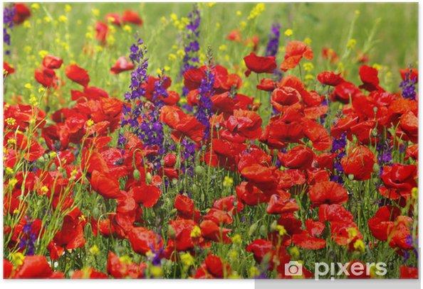 Poster Sage et coquelicots sauvages - Fleurs