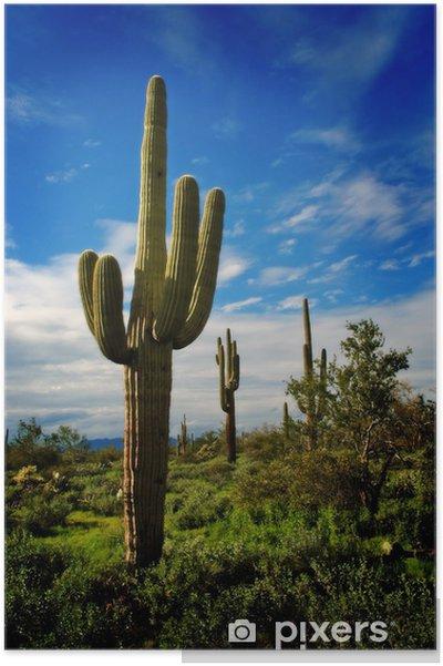 Poster Saguaro Cactus 9 - Plantes