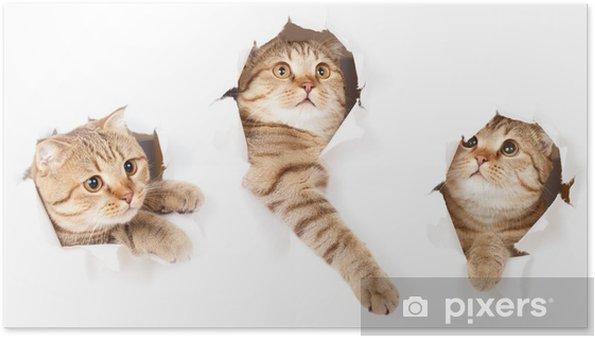 Poster Satt en katt i papperssidan rivna hål isolerade - Teman
