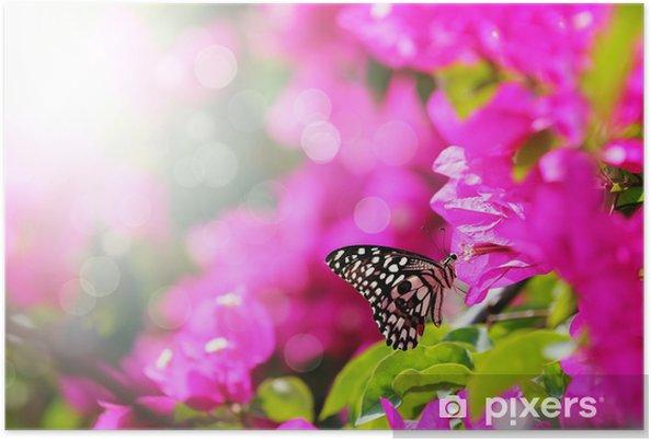 Poster Scène du matin Majestic avec papillon alimentation de nectar d'une bou - Thèmes