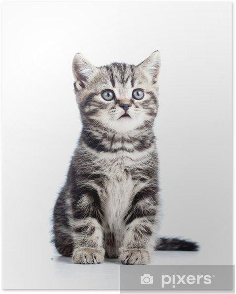Wonderbaarlijk Poster Schattige zwarte kitten kat geïsoleerd op wit • Pixers RS-57