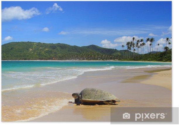 Sea turtle on beach. El Nido, Philippines Poster - Underwater