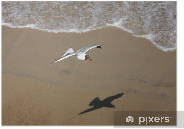 Poster Seagull sur le sable vers la plage - Oiseaux