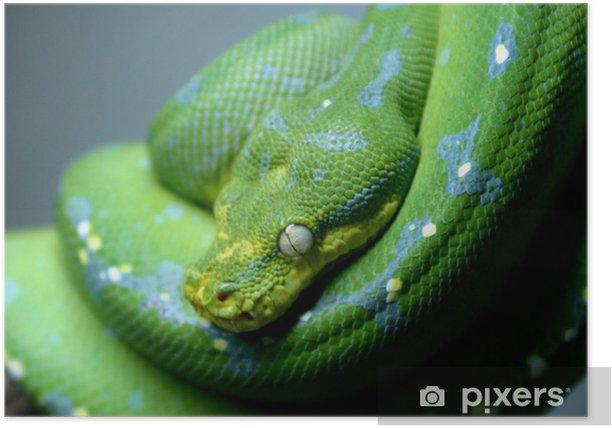 Poster Serpent - Vie