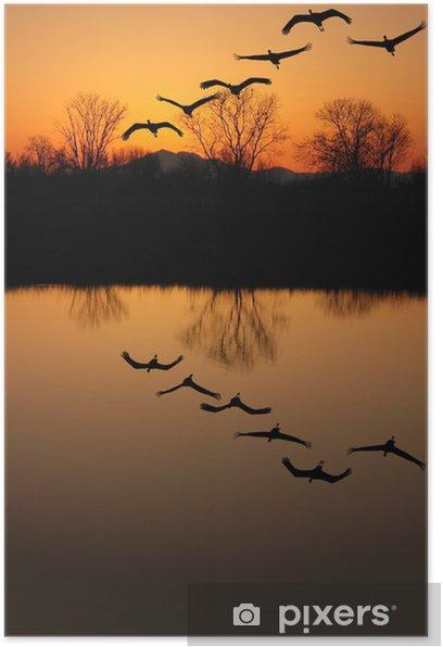 Poster Silhouette d'espèces de grues, Reflet - Oiseaux